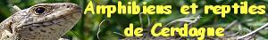 Ce site propose des photos libres de droits d'amphibiens de montagne (Pyrénées Orientales)